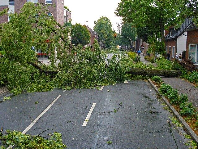 Almanya'da fırtına hayatı olumsuz etkiledi